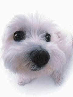 chien avec nez qui bouge