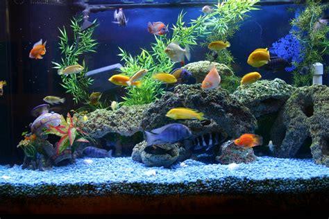 types  freshwater aquariums  aquarium setup