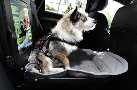 doggysafe sicherheit komfort fuer hunde im auto