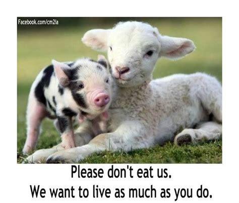 cute vegetarian quotes quotesgram
