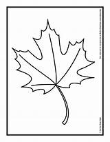 Leaf Coloring Maple Autumn Leaves Oil Drawing Pastels Printable Template Pages Palm Hub Oak Fall Getcolorings Pumpkin Clipartmag Paintingvalley sketch template
