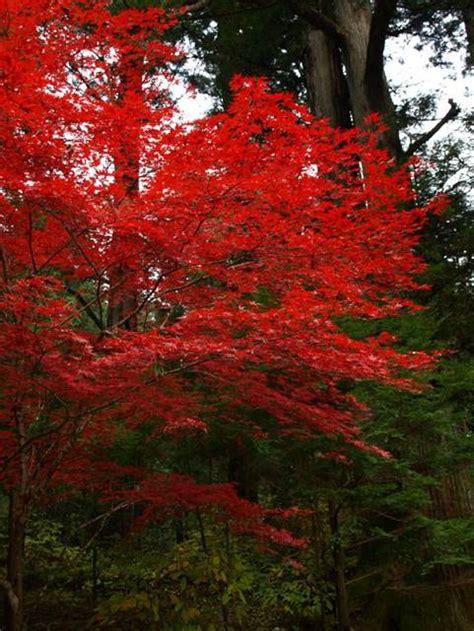 Japanischer Garten Erlangen by Berg Wasser Yin Und Yang Im Japanischen Garten