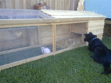 Diy Rabbit Hutch Designs Plans