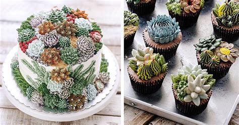 succulent cakes covered  prickly plants   frosting