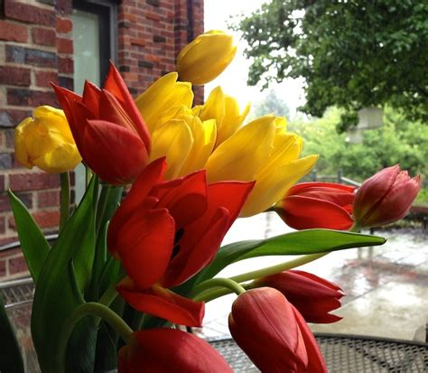 it s time to plant tulip daffodil and crocus bulbs