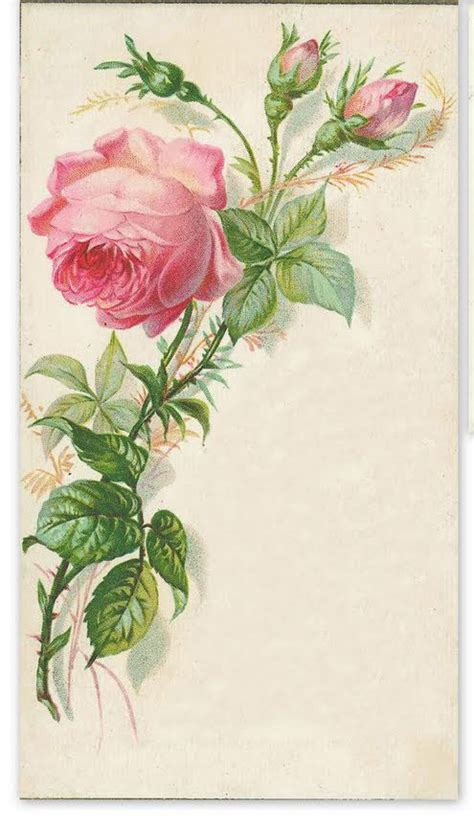not shabby ta long stem pink rose buds clipart design elements