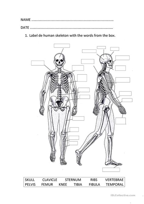 The Musculoskeletal System Worksheet  Free Esl Printable Worksheets Made By Teachers