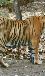 Pin on Ranthambhore Tiger Reserve | Sawai Madhopur | Rajasthan