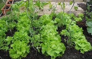 Planter Des Graines De Tomates : planter des tomates jardiner avec jean paul ~ Dailycaller-alerts.com Idées de Décoration