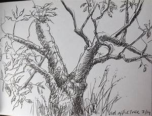 Apple Tree ink drawings | End House Arts