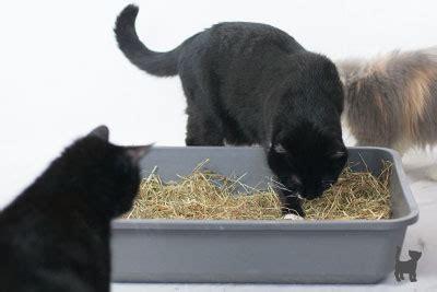 beschaeftigung von und mit katzen katzenspielzeug