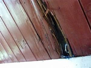 Dach Neu Eindecken : dach eindecken dach related keywords suggestions dach long tail keywords neues dach f r die 42 ~ Whattoseeinmadrid.com Haus und Dekorationen