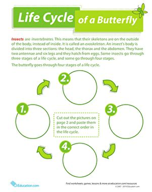 life cycle of a butterfly worksheet education com