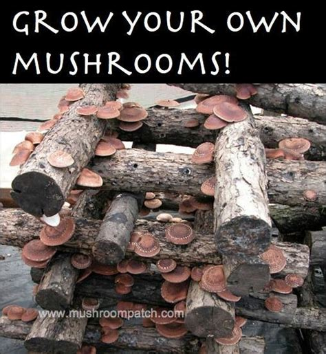 grow your own mushrooms 17 best images about mushroom farming hunting on pinterest logs farms and mushroom cultivation