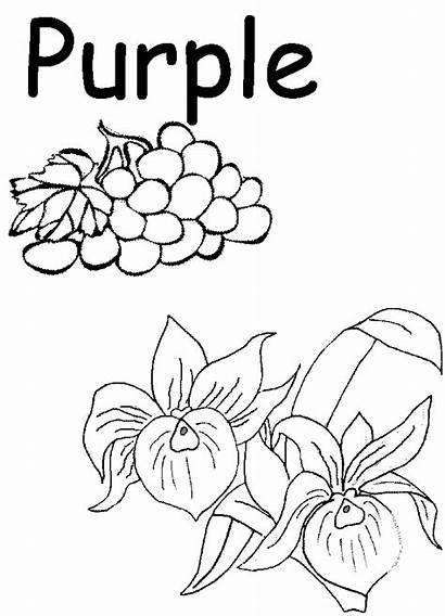 Preschool Coloring Purple Worksheets Worksheet Colors Printables