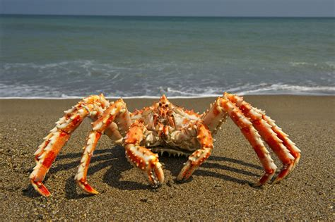 Crab Fishing Boat Jobs by Alaskan Crab Fishing Jobs Salary Image Of Fishing