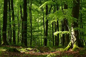 Umweltministerium NRW Wald und Klima