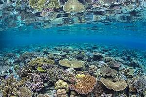 2018  U2013 The Year For Coral Reefs  U2013 National Geographic