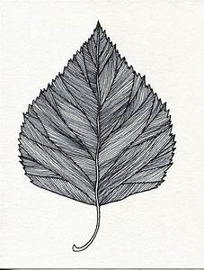 Drawn tree leaf - Pencil and in color drawn tree leaf