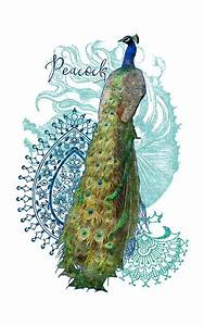 Indian, Peacock, Henna, Design, Paisley, Swirls, Mixed, Media, By, Audrey, Jeanne, Roberts