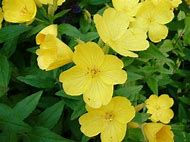 Best 25 ideas about names of perennial yellow flowers find what yellow perennial flower identification mightylinksfo
