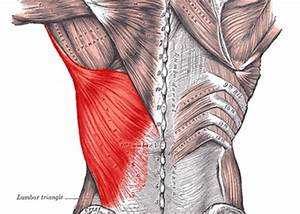 How to Relieve Pain Between the Shoulder Blades – Lat and ...