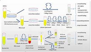 Schematic Diagram Showing Preparation Of Adipose