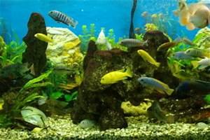 Aquarium Gewicht Berechnen : gewicht von stein das sollten sie bei der best ckung ihres aquariums beachten ~ Themetempest.com Abrechnung