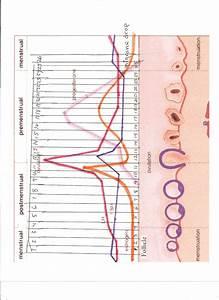 Hormone Cycle Chart Natural Birth Control