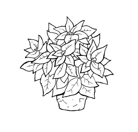 printable poinsettia coloring pages  kids