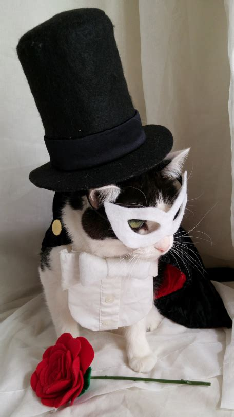 cat cosplay laurachenaultcom