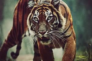 Tumblr Photography - Tumblr Photography Photo (29376595 ...