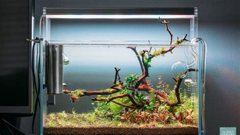 ultum nature systems  planted nano tank gallery glass aqua