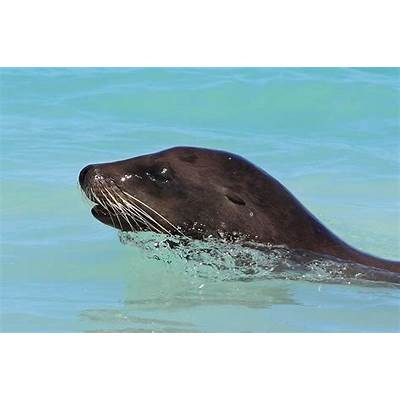 File:Galapagos Sea Lion Portrait.jpg - Wikimedia Commons