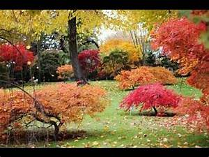Excellent Japanese Maple Varieties - YouTube  Maple