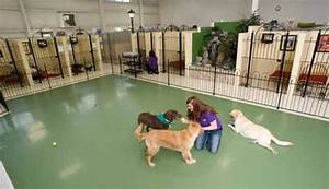 dog boarding services pet palace pet resort With dog boarding in your home