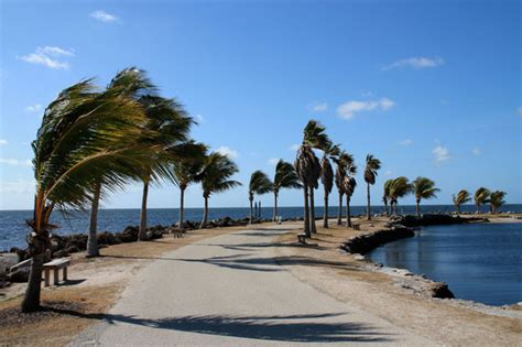 Mathison Hammock by Matheson Hammock Park South Florida Finds