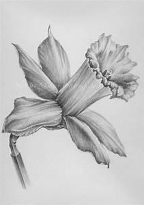 Pencil Drawings: Pencil Drawings Of Flowers