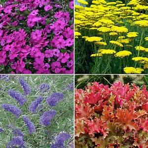 British Grown Perennial Border Collection Plants