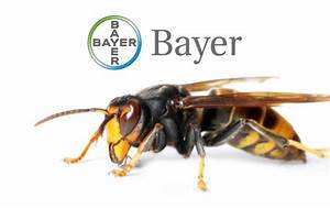 Stay Alert For Asian Hornets This Autumn