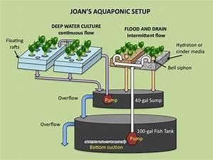 Joan Goes Green  Joan U0026 39 S Aquaponic Setup