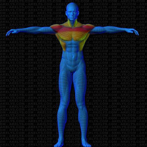 exercice chaise romaine répulsion triceps à la chaise romaine vue musculaire