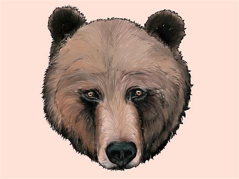 how to draw a grizzly bear with pictures wikihow