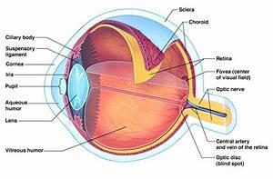 Lasik Vs Prk Eye Corrective Surgery