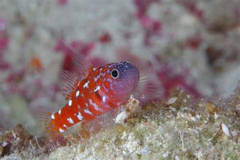 Gobyphilia Scuba Diver Life