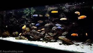Optimale Aquarium Temperatur : aquarium setup guide ph hardness temperature salt aquascaping aquariumpros inc minnesota ~ Yasmunasinghe.com Haus und Dekorationen