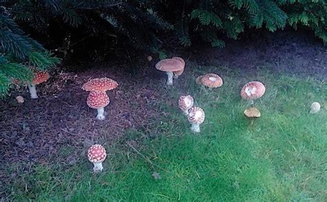 Pilze Im Garten Bodenbeschaffenheit by Pilzticker Bawue 33 Baden Wuerttemberg 33 Funde Vom 22