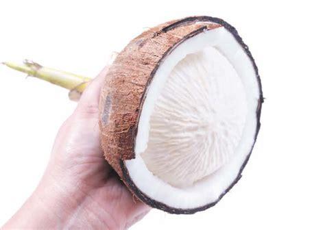sprouted coconut edible hawaiian islands magazine