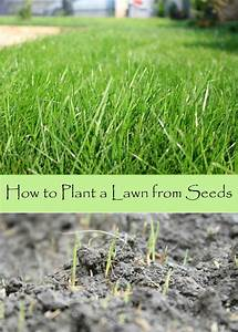 25+ best ideas about Lawn seed on Pinterest