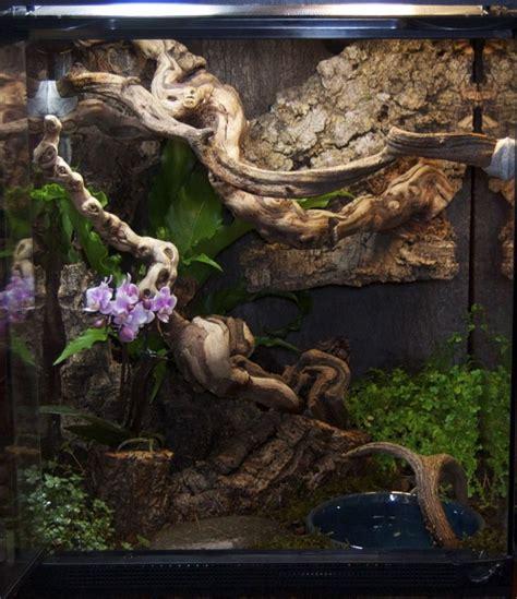 carpet python habitat  phoenix crydeviantartcom